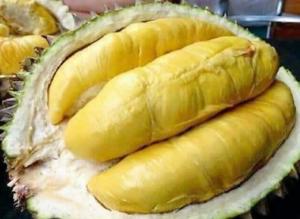 Cara Menanam Durian Musang King Agar Berbuah Lebat